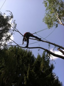 Tree Trimming | Tree Removal | Tree Service