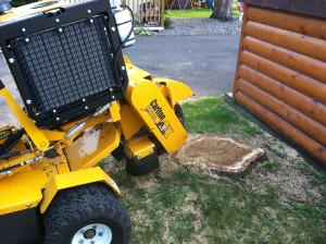 Stump Removal | Stump Grinding | Tree Service