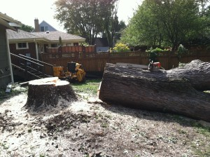 Tree Removal | Tree Trimming | Tree Service